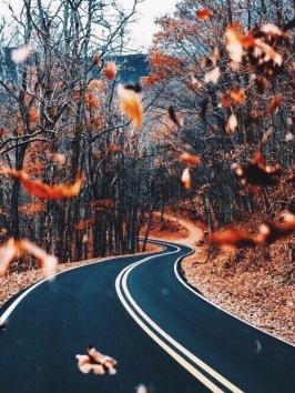 Drive me to Fall