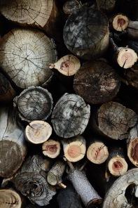 Wood Stump Love