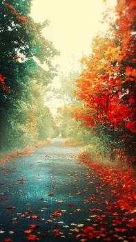 Perfect Street